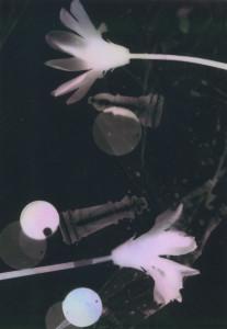 photogram#14