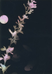 photogram#15